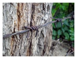 Barbed Fence by rexem