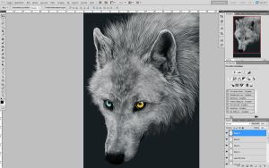 .:fallen wolf:. WIP by WhiteSpiritWolf