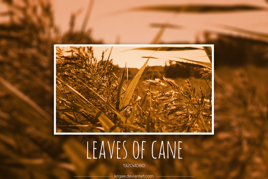 Leaves of cane by Krigee