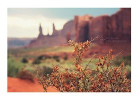 Wild Plant in Monument Valley by juice-teen