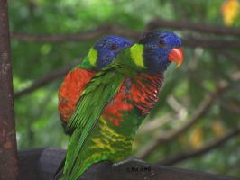 Parrots by GreenNexus51