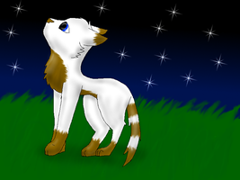 Whitefur looking at the night sky by Blue-Ink-Splatter