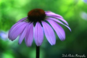 Purple Flower by DalePhotography