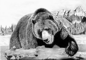 Grizzly by Tobias20