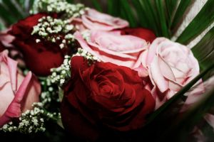 Roses by ai-chyan