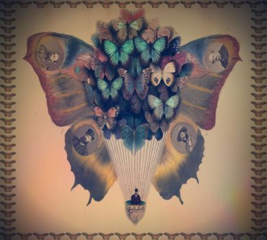 The Butterfly Continuum by lisamarimer