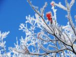 Frosted Branches by LauraMartinArt