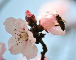 Bee by 2fast05091993