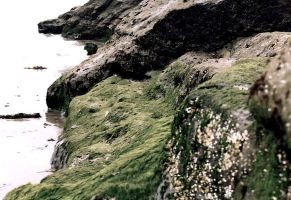 rocks at the beach by body-language