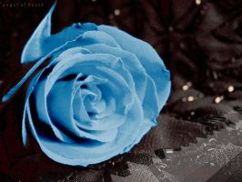 deathly Blue rose by m-duck
