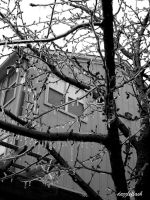 Frozen Branches- Black and White by dazzleflash
