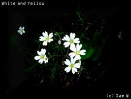 White and Yellow by Wings-Of-My-Soul