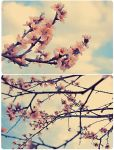 Spring Is Here by Amatorka