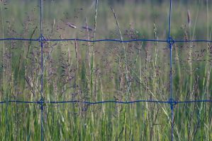 Fenced grass by perost