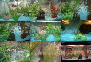 More pictures of my fish tank by Mel-at-ne