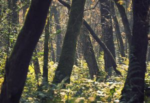 Hillhead Wood by younghappy