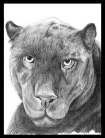 Panther Portrait by ninatwinsanity