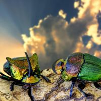 Scarab Beetles by FauxHead