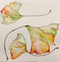 Ginkgo Leaves by mybuttercupart