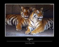 Tigers by pshope