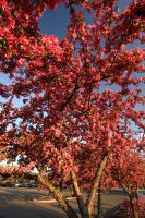 Pink Spring Tree by froggynaan