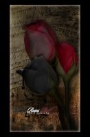 Black Roses Red by trinity-77