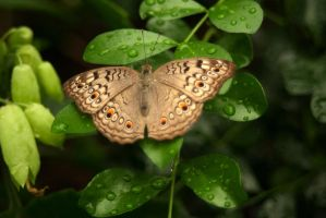 Brown and orange dots by steppelandstock