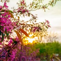 Scenes from Campus Sunset Flowers by redwolf518