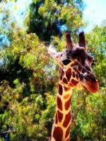 ...Zoo 4... by SCiganovich
