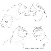 Diego Shira rough head models by whisperpntr