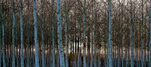 Foret11 by hubert61