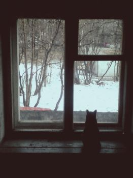 Cat and window by Spector8