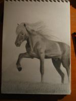 Icelandic horse by reacool