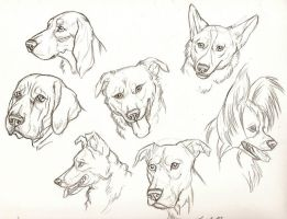 Dog face study by Rabastan