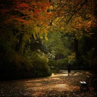 Another autumn by TotoRino