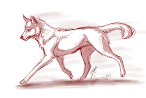 Red wolf by MayhWolf