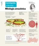 waterlily Infographic by pauloomarcio