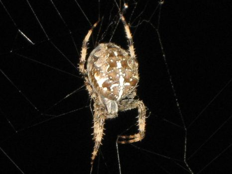A Spider At Night by Tempest11