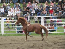 Rodeo Horse Stock 4 by horsecrazycool
