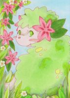 #504 ACEO Shaymin Pokemon by uniquorned