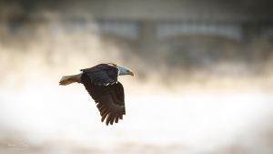 .:Flying in the Mist II:. by RHCheng