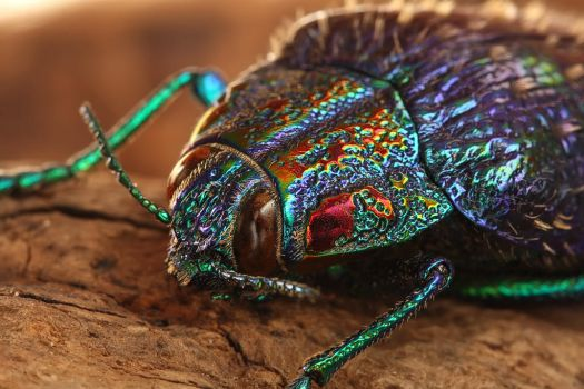 Jewel beetle by ELKAPL