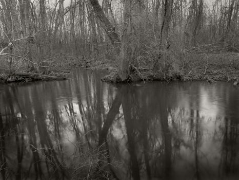 White Oak Swamp Battlefield ~ Virginia by ShadowRobber