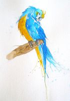 Blue and Gold Macaw by anamorenita