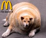 McDonalds kills canines. by totallyunacceptable