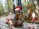 Squirrel Christmas by Cundrie-la-Surziere