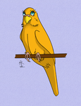 Golden the Budgie by ArkadyRose
