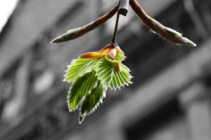 Think Spring - Weeping Beech Leaves by AndehDulac