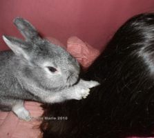 My Bunny Digging In My Hair by youlittlemonkey