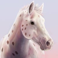 Appaloosa in the Morning by vixentheangryfox